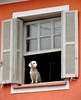 Cão de guarda (let's fotografar) Tags: bichos cachorro dog animals interestingness