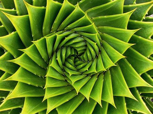 Green Spiral by meurer