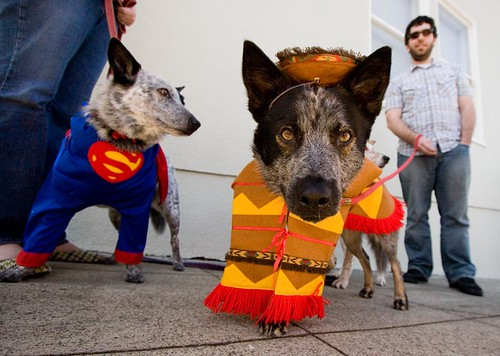 Super & Perro