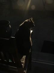 Cat (Catching Magic) Tags: cat halflight original mc05negativespace fuji tiraudan