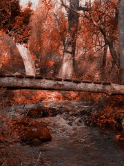 Bridge over troubled water (Mara86) Tags: bridge water agua puente rojo hojas leaves autumn otoo cazorla espaa andalucia jaen lafotodelasemana lfsotonho