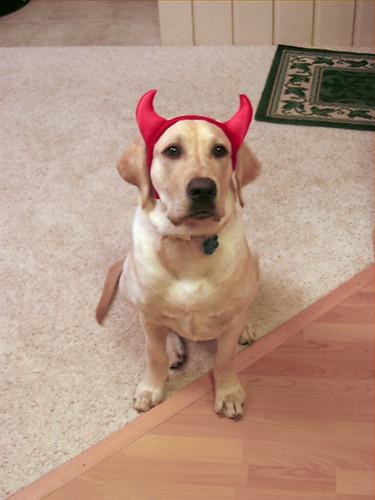 Devil Cooper