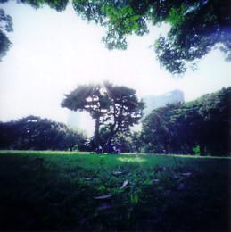 shade of a tree