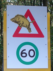 Pas op! Vliegende zwijnen! - Caution! Flying wild boars! (_martijn) Tags: nunspeet elspeet bos sign everzwijn zwijn boar wildboar