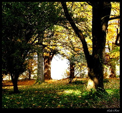 Mystical dream (Lida Rose) Tags: lidarose autumn fall mystical trees light seasons ilovenature gutentag photoshop