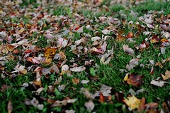 Leaves (jonathangaskin) Tags: street color tress cans