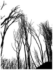 Congregation (Jeff T. Alu) Tags: black white photoshop digital tree fire surreal moody lonely dark outdoors bleak blackandwhite deserted illusion zen medetation medetate power impact graphic doom bright earthy dirt gritty intense visionary heat passion 4x4 remote california desolate dreamy nightmare euphoric