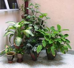 Greens @ Indoor Garden