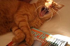 Inspired (Living Juicy) Tags: cat magazine jerry yawn housebeautiful oct2005triphome livingjuicy lj2005