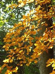 Autumn in Tring (yaaaay) Tags: tring england autumn fall