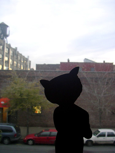 greenpoint cat