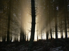 Let There Be Light! (johnmuk) Tags: trees winter nature tag3 taggedout ilovenature bravo tag2 tag1 gutentag explore cannock staffordshire johnmuk topphotoblog 1on1naturephotooftheday