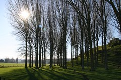Sun in Copse - by James @ NZ