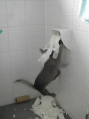 Kitten toilet paper commercial