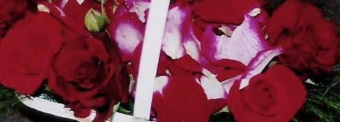 Nest of roses