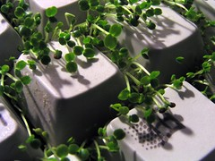 Keyboard Cress 04