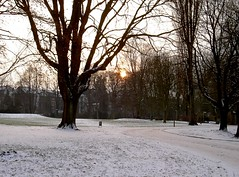 Winter sunset in westpark Aachen (der.martin) Tags: park trees winter sunset orange white snow black cold green nature contrast landscape evening loneliness aachen westpark