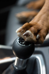 paw shift (noahstone) Tags: dog car cat paw shift vizsla buddy ridgeback audi rhodesian ysplix