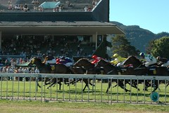 Horse Race (arriba) Tags: horse races trentham provoke theraces