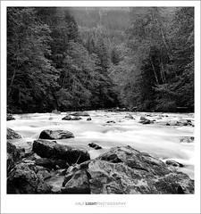 plate 378 (koaflashboy) Tags: 6x6 tlr film mediumformat landscape washington nationalpark fineart duotone ilfordfp4 ciroflex halflightphotography