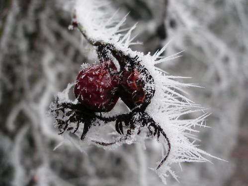 Ice Art -- ice winter 2006 frost snow darmstadt fruit art