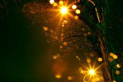 Snow Flakes at Night (olvwu | ) Tags: winter usa mist ny newyork ice glass night niagarafalls streetlight nightshot freezing stunning snowing newyorkstate icy jungpangwu oliverwu oliverjpwu olvwucom shotwithtripod olvwu jungpang