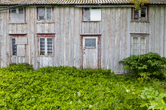 Abandoned and overgrown (TAKleven) Tags: old house building green abandoned norway norge decay hus nordnorge vesterlen grnn bygning nordland grnt gammelt forlatt forfall canonef24105lisusm canoneos5dmarkii nothernnorway
