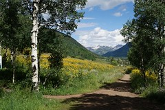 Lower Loop Trail (Let Ideas Compete) Tags: trees mountains tree colorado hiking path scenic meadow trail co wildflowers hikers aspen hillside crestedbutte beatenpath