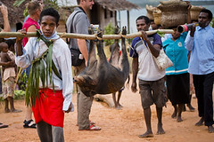 Sudest T (Josh & Sarah Kitchen) Tags: png papuanewguinea select sudest biblededication joshkitchen