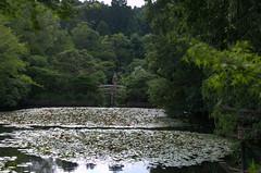 Lake Ryōan-ji