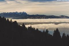 NEBELMEER AM BODENSEE MIT BLICK AUF DEN SÄNTIS #1 (PADDYSCHMITT.DE) Tags: nebelmeer säntis bodensee nebelambodensee bregenz bregenzimnebel winterambodensee schneebedeckteberge