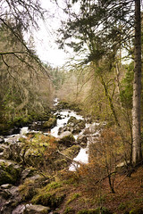 Dunkeld Hermitage 2017-05757 (garypatersondesign) Tags: dunkeld perthshire perth scotland forest trees
