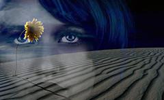 (Donald Palansky Photography) Tags: sonyslta99v flower desert blue doubleexposure sand fineartphotography art portrait