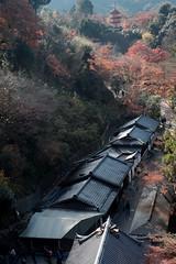 Autumn at the trace5@Kiyomizu, Kyoto (Amselchen) Tags: japan kyoto kiyomizudera travel season lateautumn earlywinter leaves coulours outdoor trees fuji fujinon fujifilm fujifilmxseries xt2 fujixt2 xf35mmf14r temple classicchrome landscape
