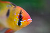 Bild på min andra hobby som är akvarium/Picture of my other hobby that's Aquarium (Klas-Goran Photo) Tags: hobby fish aquarium