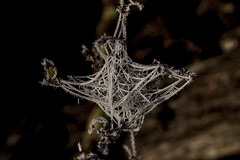 Complicated Structure (Klaus Ficker --Landscape and Nature Photographer--) Tags: complicatedstructure frost cold spiderweb theweb ice icecrystals closeup macro morning morninglight milfweb kentuckyphotography klausficker canon eos5dmarkii