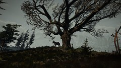 Horse by a tree (simonmino) Tags: witcher3 skellige roach