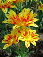 Flowers (vapspwi) Tags: minneapolis minnesota minnehaha park flowers