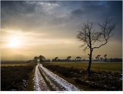 Strabrechtse Heide (nandOOnline) Tags: strabrecht x1d50c landschap hasselblad review x1d strabrechtseheide boom winter sneeuw pad koud zon middenformaat natuur bijzon sundog mierlo nbrabant nederland