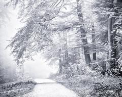 Your Way into the Light... (Ody on the mount) Tags: anlässe bäume em5 licht mzuiko6028 nebel omd pflanzen schwäbischealb wald wanderung wege bw monochrome sw sanktjohann badenwürttemberg deutschland de