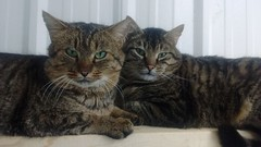 Butch (left) - 2 year old neutered male