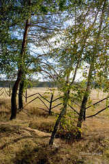 Zigzag Fence (Spike's Shoes) Tags: wood wooden fence farm fields forest patterns design vertical outdoor outside daytime daylight travel traveling destinations tour tourism tourist touring attraction holidays vacations vacationing visiting recreation enjoyment sightseeing scenery sights view picturesque imagery peaceful nature green trees environmental countryside country beautiful beauty healthy fresh air c5125031 color colour zawady polska polish east eastern europe european cs09 centralpoland nationalforest steveskjold zigzag repeating pattern bluesky landscape scenic scenicsnotjustlandscapes