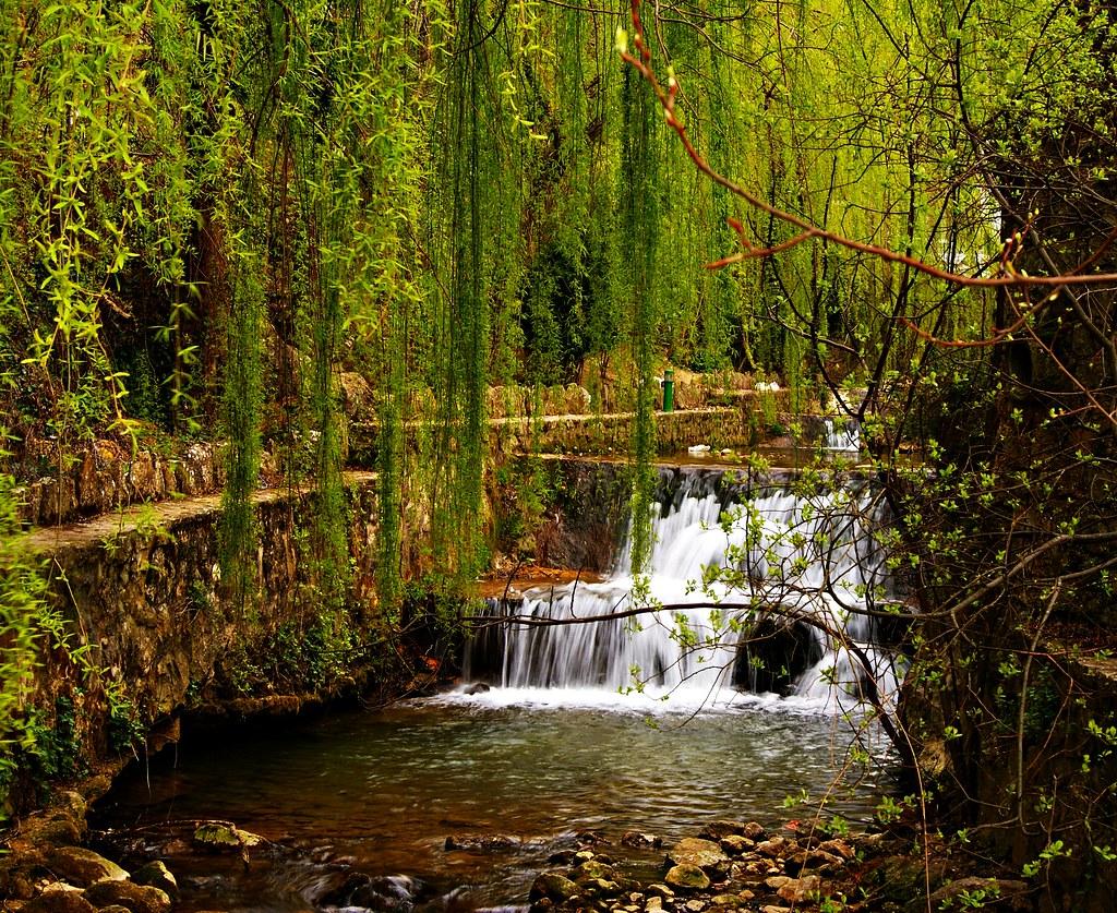 The world 39 s best photos of enredaderas and naturaleza for Jardin 43 rio gallegos