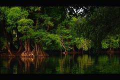 PRIMAVERA (NIKONIANO) Tags: primavera mexico lago spring surreal michoacan follaje laprimavera primetemps camecuaro sabinos ahuehuetes sergioalfaroromero enmichoacán