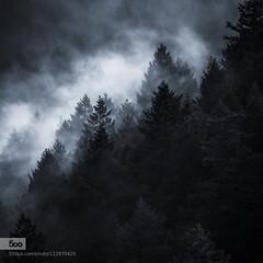 Photo (plaincut) Tags: trees mist tree art clouds landscape photography design cool san francisco 500px elmofoto plaincut