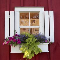 Red Shanty (Read2me) Tags: she flowers white window cye gamewinner friendlychallenges thechallengefactory tcfunanimous pregamewinner challengeclubwinner perpetualchallengewinner