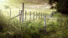 PS22 (Robert Björkén (Hobbyfotograf)) Tags: fence dof outdoor fields shallow fencepost skövde samyang ängar ryds pentaxflickraward samyang135mm