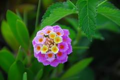 Bokeh of Nature (petrk747) Tags: voyage summer flower travelling green nature turkey garden spring flora antalya