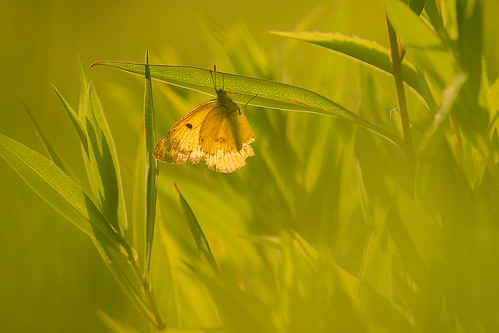 """Butterfly in Green • <a style=""""font-size:0.8em;"""" href=""""http://www.flickr.com/photos/22289452@N07/19754099096/"""" target=""""_blank"""">View on Flickr</a>"""