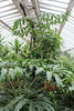 "Amorphophallus titanum - Botanischer Garten Berlin • <a style=""font-size:0.8em;"" href=""http://www.flickr.com/photos/25397586@N00/19760592462/"" target=""_blank"">View on Flickr</a>"
